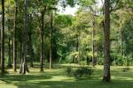 Hutan Kebun Raya Bedugul
