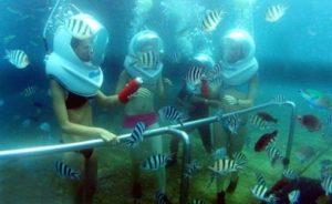Banyak Ikan Sebra seawalker