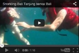 Video Snorkling Bali