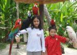 Anak anak suka burung