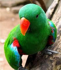 Bali Bird singapadu