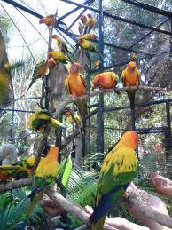 Feeding bird Bali Bird park