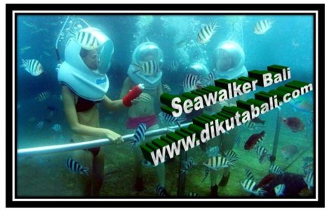 SeaWalker Bali Murah