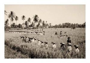 Bali 1920