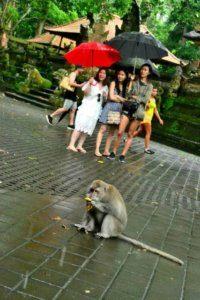 Sangeh mongkey forest