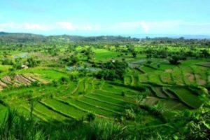 Terace rice di Bali
