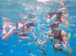 Bersnorkling murah di Bali