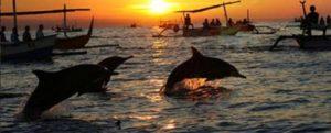 Nonton Wild dolphin lovina