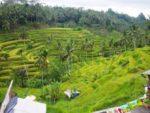 Tegalalang rice Ubud