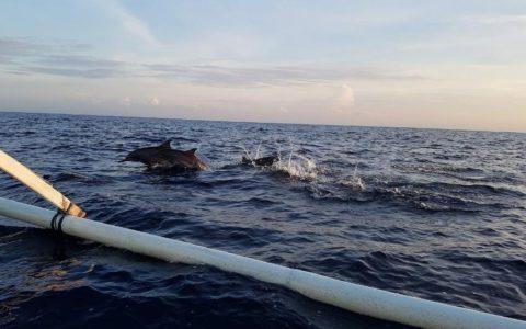 wild Dolphin Lovina Bali