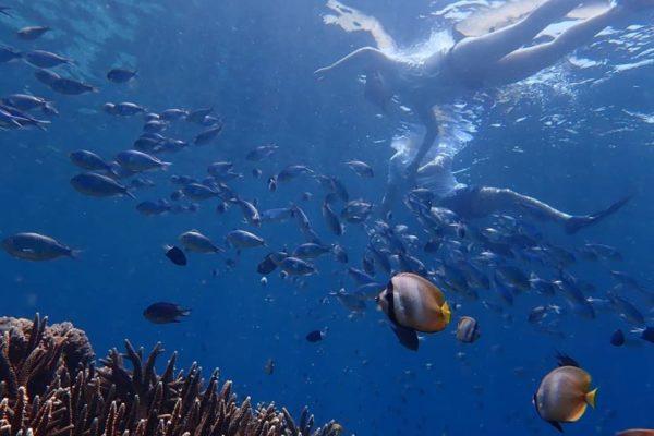 ada 3 spot terbaik Snorkeling nusa lembongan