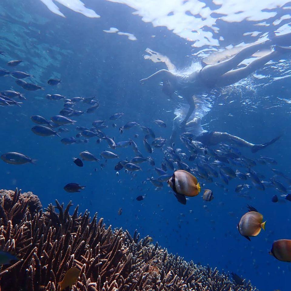 Snorkeling nusa lembongan